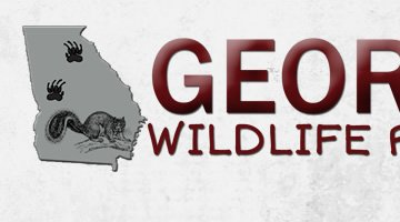 Georgia Wildlife Removal
