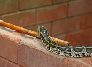 Snake Control and Removal Services